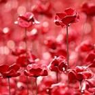 Remembrance Day & Peacetime Celebrations